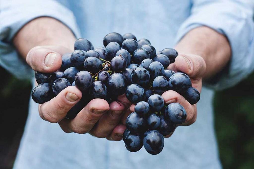 Vinotherapie hält uns schön und gesund